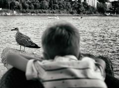 Seagull scout (Krsz-Kiss Pter) Tags: bw blackandwhite blackwhite blackandwhitephotography monochrome mono croatia rovinj sea oldtown town harbour water waterfront seascape seaside urban urbanexploration wide wideangle 1635 canon