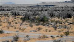 Desert Pondering (Shot by Newman) Tags: california mountains 35mm daylight rocks view desert brush powerlines fujifilm rockformations mojavedesert fuji400 desertnature shotbynewman