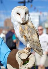 Barn Owl (ihughes22) Tags: barnowl hartleyquay ihughes22 owl birdofprey liverpool albertdock