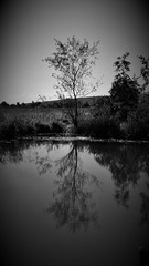 Treeflections (42jph) Tags: uk england bw white black reflection tree nature mono samsung northumberland galaxy s5 wter