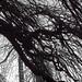 tree black in white
