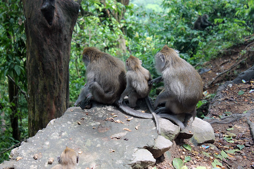 20150224_110253 Pusuk Monkey Forest, Lombok