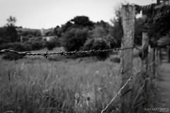 Hello, I'm Barbed (guhphoto) Tags: brazil bw white black nature grass brasil canon log wire natureza grama barbedwire barbed blackandwhitephotography naturephotography arame farpado gramado aramefarpado