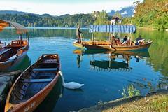 Let's see what's in the boat...Slovenia (stevelamb007) Tags: boat swan nikon d70s wideangle slovenia bled lakebled pletna stevelamb 1116mm