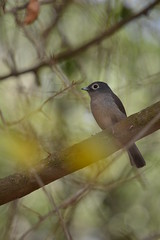 White-Eyed (Leela Channer) Tags: africa blur tree cute bird nature leaves animal grey sticks focus branch kenya bokeh creature twigs flycatcher whiteeye whiteeyedslatyflycatcher