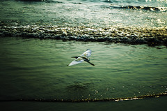 In the flight (दीपक) Tags: sunset sea india beach birds pentax kerala shore calicut k50 kozhikode pentaxk50