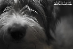 guinness eye and nose (chelseaclanof7) Tags: white black nose low guinness focal lenght