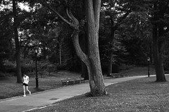 08-07-14-234 (a.cadore) Tags: nyc newyorkcity blackandwhite bw zeiss landscape centralpark candid uptown fujifilm carlzeiss xe1 zeissbiogon35mmf2 biogont235 fujifilmxe1
