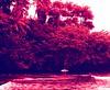 Thank you! (aloha_bigmike) Tags: film hawaii xpro crossprocess velvia100f pentax67 honolii alohabigmike