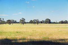Looking to the Grampians (Stefan Ulrich Fischer) Tags: australia victoria grampians outback downunder landscape kodakektachrome100hc5009 1000 20fav