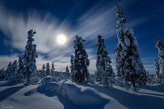 Moonlit winter night - Eine Winternacht im Mondschein (Thomas Kast) Tags: longexposure schnee winter moon snow nature night finland mond finnland nacht lappland natur lapland moonlight mondschein mondlight thomaskast salamapaja