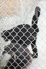 IMG_1919 (jmac33208) Tags: new york animal animals zoo land mills adirondack vails