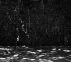root wall (~kenlwc) Tags: street leica city shadow people urban hk plant tree nature dark walking blackwhite walk hong kong root 21mm kenleung elmar21mm28 leicam9 elmarit21mmpreasph leicam9p elmar21mmf28 kenlwc