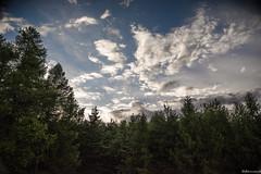 Cloud&Tree (Monumento) Tags: cloud tree pine sky blue lu nuvole alberi pini valle daosta aosta montagna moun mountain blu square paesaggio nikon dslr digital
