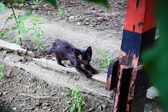Today's Cat@2016-07-13 (masatsu) Tags: cat pentax catspotting mx1 thebiggestgroupwithonlycats