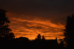 Brownshill Green. 29 July 2016. DSC_0018 (Imagine Bill) Tags: brownshillgreen westmidlands coventry sunset whitelion