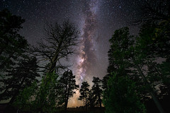 The Milky Way and some trees. In the mountains of Bryce Canyon, Utah. (Daniel Vie fotografia) Tags: park trees sky usa nature night rural america way stars outdoors utah us unitedstates canyon mount nighttime galaxy bryce astronomy zion sayan milky brycecanyonnationalpark
