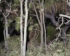 Density III, Leeuwin NP. (caughtkneeh) Tags: 6x7 westernaustralia density downsouth leeuwin