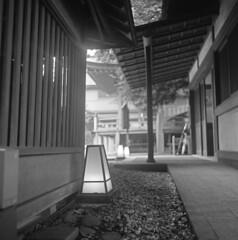 Lamps on the ground (odeleapple) Tags: bw mamiya film lamp shrine 65mm c330 mamiyasekor neopan100acros