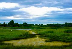 Summer Leys Lakes (williams19031967) Tags: scenic row rowing boat canoe midlands northamptonshire britain uk england welingborough 25mm f17 mft m43 mirrorless canal landscape lumix g6 panasonic nene river