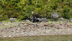 P1480862 (Tipfinder) Tags: kanada canada vancouverisland portalberni tofino ucluelet pacificrimnp long beach bearwhatching hotspringcove