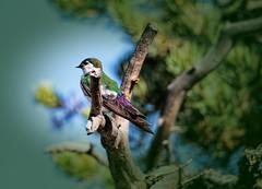 Enjoying the Sun (Scosanf) Tags: blue tree green bird nature canon eos outdoor wildlife vignette topaz 6d tamronsp150600mmf563