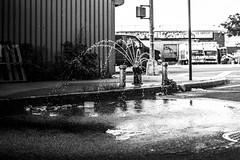 How to Stay Cool (djneri) Tags: brooklyn bushwick nyc new york city street streetphotography urban urbex black white bandw fire hydrant