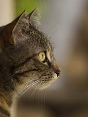 Surveillance du jardin (Titole) Tags: cat chat katze kat gato gatto nicolefaton titole