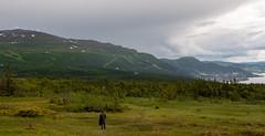 re (P. Burtu) Tags: hiking vandra sweden sverige summer sommar clouds moln sj lake trd tree snow sn mountain berg hill