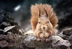 BasketFullOfHappiness (clabudak) Tags: basket acorns squirrel rocks closeup textured outdoors