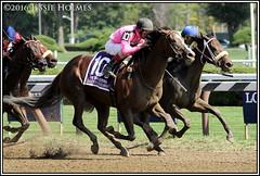 Haveyougoneaway wins the Ballerina (Spruceton Spook) Tags: saratoga horseracing ballerina horses haveyougoneaway johnvelazquez