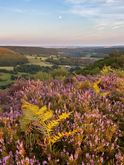Hawnby Hill (matrobinsonphoto) Tags: heather bloom ling fern ferns bracken purple pink sunset sunlight golden hour sun light valley hawnby north york moors yorkshire countryside summer landscape scenery outdoors british uk moon