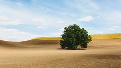 For The Birds... (John Westrock) Tags: tree farmfield landscape nature sky dirt canoneos5dmarkiii sigma35mmf14dghsmart washington pacificnorthwest steptoe johnwestrock