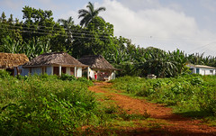 Vinales Tobacco Farm Cuba (Lesmacphotos) Tags: tobacco farm lush cigar fertile washing farmer