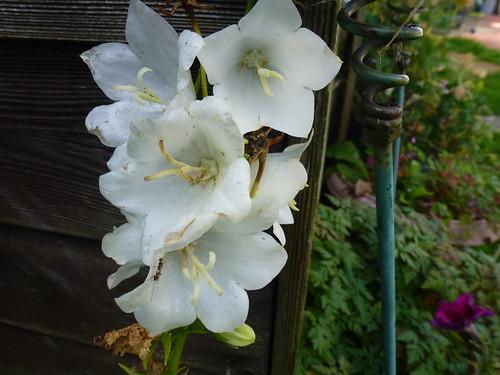 White Flowers !