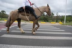 DSC_5446 (neyde zys) Tags: bandadabrigada brigadamilitar desfilefarroupilha gauchos indumentaria prendas tradicao