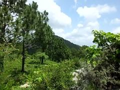 Boz view da Islamabad Shar da ghra po sar vilor!! >___< (Khan Khattak) Tags: khankhattak margallas margallasnationalpark himalyangrona himalyanregion islamabadthebeautiful islamabad isloo kpk khyberpakhtunkhwa khyberpashtunkhwa afghania northernpakistan traveloguenorthernpakistan nationalparksofnorthernpakistan khanafghan mountainshills khan khattak khattaks khankhattaks islamabadthebeautifulkhyberpakhtunkhwaborderregion