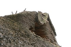 244 Haithabu WHH 21-08-2016 (Kai-Erik) Tags: geo:lat=5449123263 geo:lon=956686942 geotagged haithabu hedeby heddeby heiabr heithabyr heidiba siedlung frhmittelalterlichestadt stadt wikingerzeit wikinger vikinger vikings viking vikingr huser vikingehuse vikingetidshusene museum archologie archaeology arkologi arkeologi whh wmh haddebyernoor handelsmetropole museumsfreiflche wall stadtwall danewerk danevirke danwirchi oldenburg schleswigholstein slesvigholsten slesvigland deutschland tyskland germany bohlenwand reparatur zweitesskaldentreffen geschichtenerzhler musiker gruppesitram thomaspetersen jorgederwanderer urdvaldemarsdatter mittelalterlichemusikinstrumente skalden thorshammeralsamulettauszinngegossen 21082016 21august2016 21thaugust2016 08212016 httpwwwhaithabutagebuchde httpwwwschlossgottorfdehaithabu