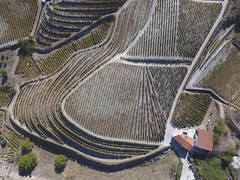 Terrace-Like (Aerial Photography) Tags: prt 01102016 barcos bogen dji0028 distrviseu dourotal fotoklausleidorfwwwleidorfde kurve landschaft landwirtschaft luftaufnahme luftbild ph400028 portugal quintadapadrela tabuaco weinanbaugebiet weinbau weinberg weinrebe weinreben weinstock aerial agriculture curve grabevine grapevine landscape outdoor vineyard viniculture winegrowingarea tabuacodistrviseu