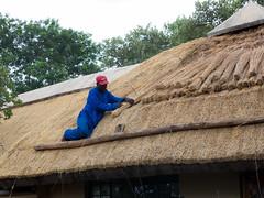 Roof renewal Tshokwane picnic site (jaffles) Tags: holiday southafrica wildlife olympus safari np sdafrika kruger krger