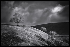 first to the top (Malajusted1) Tags: tree hill lancashire pendle clitheroe gisburn downham bowland chatburn worston