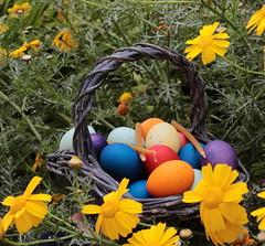 Easter eggs (kurjuz) Tags: easter traditional eastereggs serbian 2015 paintedeggs