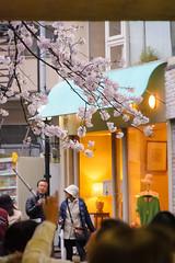 DS7_1234.jpg (d3_plus) Tags: building rain japan walking spring scenery bokeh kamakura daily architectural telephoto rainy  tele marketplace yokohama tamron kanagawa   dailyphoto 28300mm  shonan kawasaki thesedays shoppingstreet     28300     tamron28300mm    tamronaf28300mmf3563   a061  architecturalstructure telezoomlens d700   tamronaf28300mmf3563xrdildasphericalif nikond700 tamronaf28300mmf3563xrdildasphericalifmacro tamronaf28300mmf3563xrdild nikonfxshowcase a061n