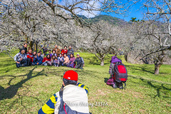 Harry_23316,,,,,,,,,,,,,,,,,,,,Plum,Plum Tree,Tree,Fruit,Farm (HarryTaiwan) Tags: tree fruit nikon farm plum taiwan     plumtree  d800                    harryhuang  hgf78354ms35hinetnet adobergb