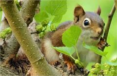 Baby Squirrel (sh10453) Tags: usa animals squirrels michigan wildlife panasonic oakpark fz200