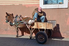 Donkeys of Marrakesh (JohntheFinn) Tags: africa railroad station architecture donkey railway unescoworldheritagesite railwaystation morocco maroc marrakech souk medina marrakesh marokko afrique railroadstation highatlas arkkitehtuuri rautatieasema afrikka aasi