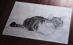 """A cat called """"Muschen"""" (Heldin_im_Chaos) Tags: pencil cat drawing katze bleistift zeichnung"""