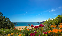 St Brelade's Bay - Jersey (paulapics2) Tags: beach sea ocean stbreladesbay jersey coast blue summer bluesky bay floral flora blumen fleurs canoneos5diii canonef2470mm