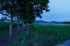 AA-20160727-1196 (andreas.abzieher) Tags: canon canon6d canonef24mmf14liiusm dossenheim sunset landscape primelens badenwrttemberg deutschland de