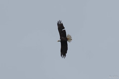 BC Vacation 2016-07-23 034 (Roger's Eye <(r)>) Tags: burnslake britishcolumbia canada ca bc vacation wild life wildlife